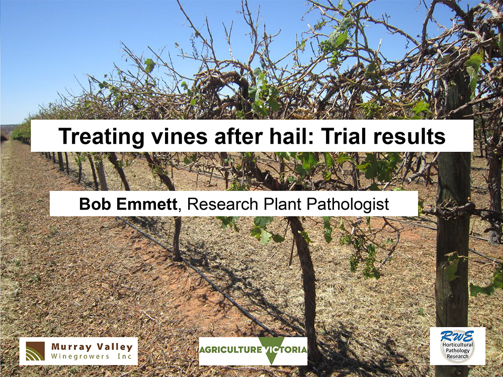 Treating vines after hail: trial results - Dr Bob Emmett, Research Plant Pathologist