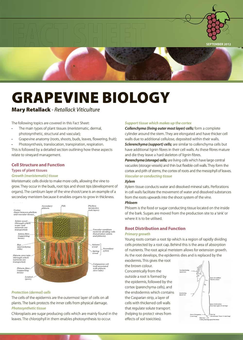 Grapevine Biology