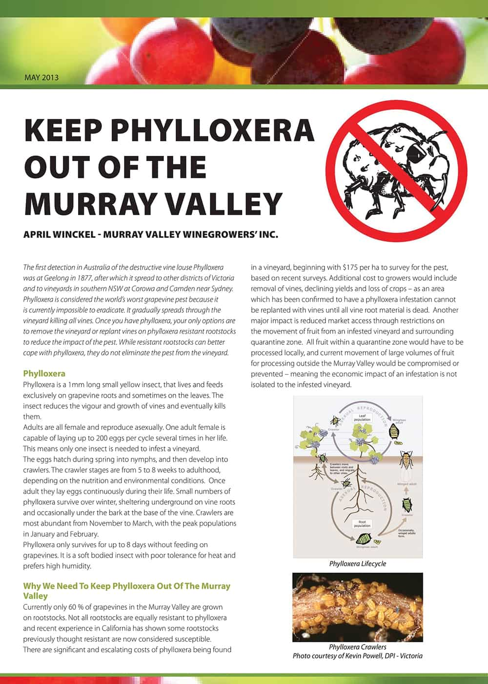 Keep Phylloxera out of the Murray Valley