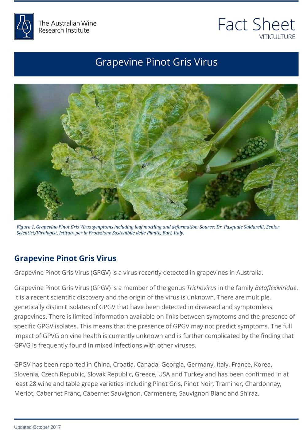 Grapevine Pinot Gris Virus