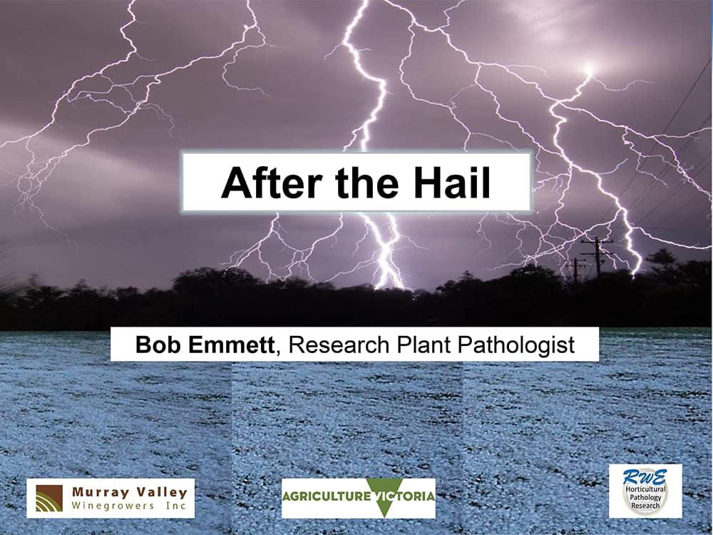 After the hail - Dr Bob Emmett, Research Plant Pathologist